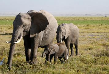 Elephants family on the african savannah