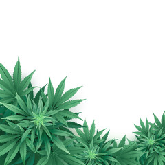 Cannabis or Marijuana background.