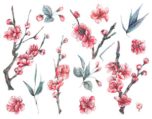 Set of watercolor spring blooming floral elements