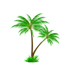 Palm tree tropical island summer