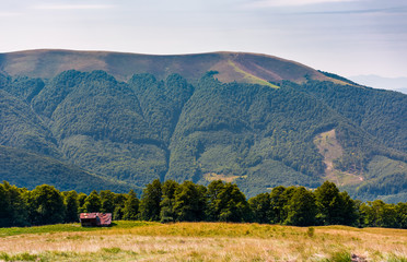 abandoned herdsman shed on hillside near forest. lovely summer nature scenery in Carpathian mountains