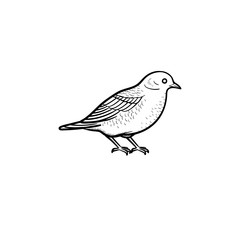 Vector hand drawn Bird outline doodle icon. Bird sketch illustration for print, web, mobile and infographics isolated on white background.