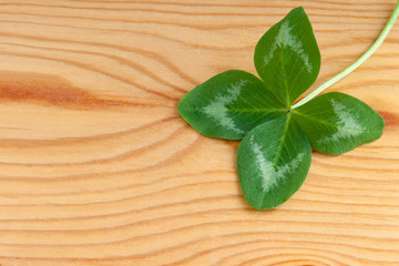 Four-leaf Clover on a wooden Background. Concept Saint Patrick's Day for cards, invitations, packets, posters. Shamrock. Feast 17 March. Luck, joy, Happiness.