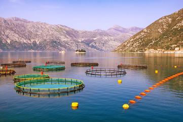 View of fish farm.  Bay of Kotor (Adriatic Sea), Montenegro