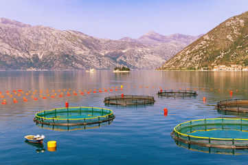 View of fish farm in Kotor Bay (Adriatic Sea). Montenegro
