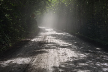 Beautiful sunrays falling into a tunnel created by the dense forest of Shiretoko National Park, Hokkaido, Japan