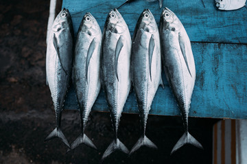 The market for marine fish