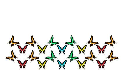 butterflies in order of chess board, with copy space, colors of the rainbow