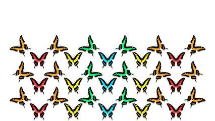 butterflies in order of chess board, all colors of the rainbow