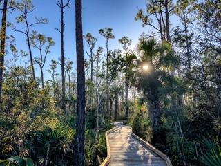 boardwalk in the swamp