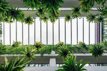 Vertical Garden - Green Tropical Plants Hanging in Bright White Building