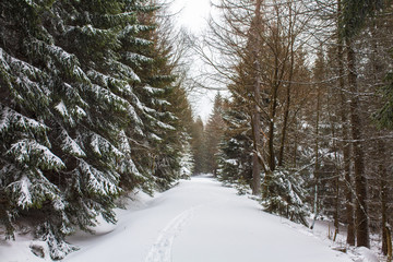 Snow covered winter forest
