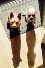 Chihuahua shadows