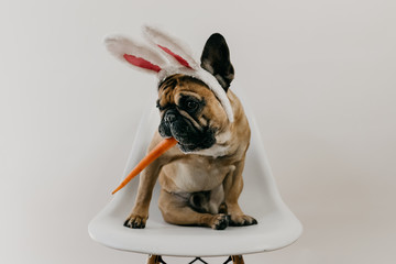 French Bulldog Puppy Dog Wearing Easter Bunny Ears