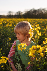 Little girl  in rapeseed flowers at dusk.