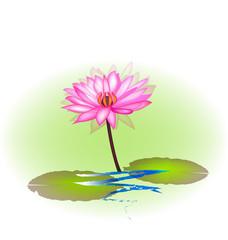 Pink lotus plant icon vector