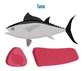 Tuna vector. Sea fish