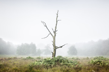 Lone tree in a misty woodland