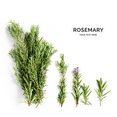 Creative layout made of rosemary . Flat lay. Food concept. Rosemary on the white background