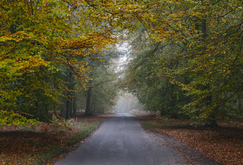 Country road through woodland in autumn. Norfolk, UK.