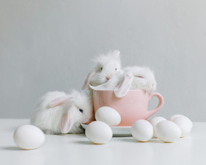 Three Little white rabbit in a mug