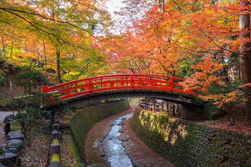 京都 北野天満宮 もみじ苑の紅葉