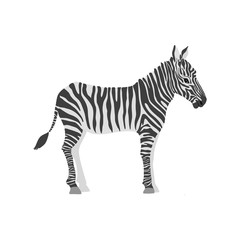vector cartoon zebra