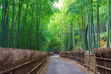 京都府向日市 竹の径