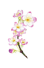 hand drawn watercolor blossoming branch