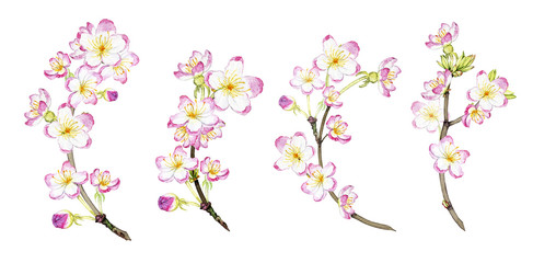 set of hand drawn watercolor blossoming branches
