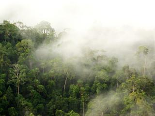 fog over mountain, Thailand