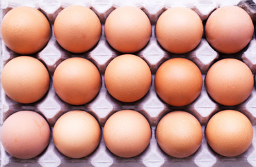 Closeup of raw chicken eggs in egg box or carton