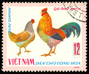 Ukraine - circa 2018: A postage stamp printed in Vietnam shows drawing Hen and rooster Apricot Ri Chicken - Gallus gallus domesticus. Series: Domestic fowl. Circa 1968.