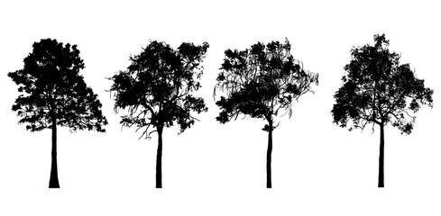 silhouette tree on white background.