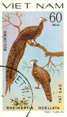 Ukraine - circa 2018: A postage stamp printed in Vietnam shows drawing Crested Argus - Rheinartia ocellata. Series: Pheasants. Circa 1978.