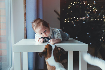 Little infant and dog with Christmas tree on background.