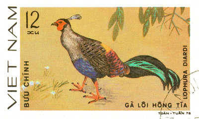 Ukraine - circa 2018: A postage stamp printed in Vietnam shows drawing Siamese Fireback - Lophura diardi. Series: Pheasants. Circa 1978.