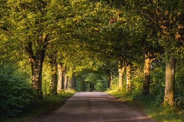 Obraz Road near small Zelki village in Masurian Lakeland region of Poland - fototapety do salonu