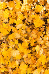 Yellow leaves on the ground in autumn
