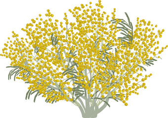 isolated lush yellow mimosa illustration