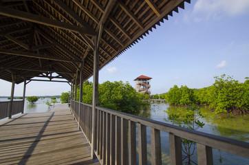 Mangrove forest ecotourism at karimun jawa island, indonesia