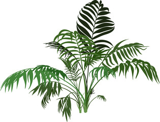 Branches Exotic palm bush isolated on white background