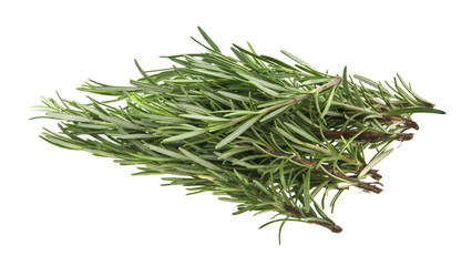 green sprig of rosemary isolated on white background