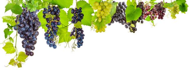 bordure de grappes de raisins sur fond blanc