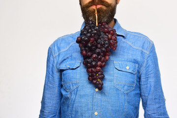 Man with beard holds bunch of black grapes