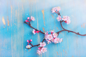 Branch of blossom sakura. Spring or easter holiday concept Wall mural
