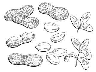 Peanut graphic black white isolated sketch illustration vector