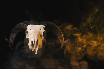 Real ram skull with horns on yellow smoky background