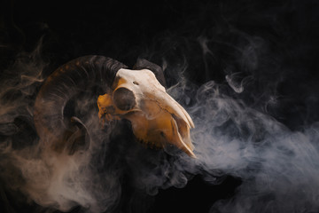 Ram skull with horns on smoky background