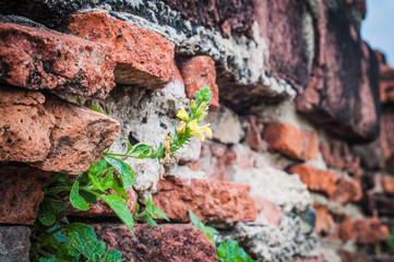 Aged and dirty red brick wall texture with green plant and yellow flower background
